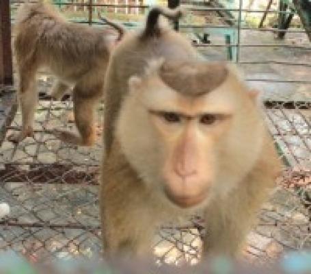 Vườn thú - Thú tiền sử